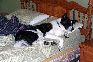 Loki on Pillow
