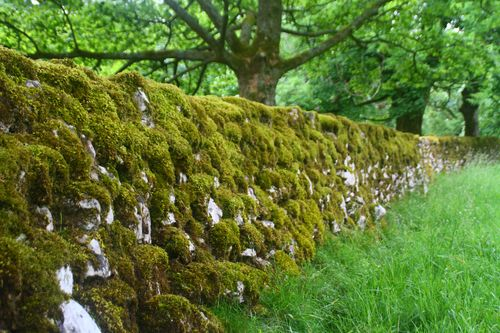 6 Dales - Moss wall