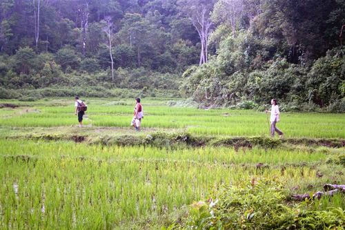 Traversing Rice Fields