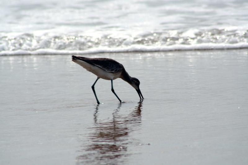 Bird_eating