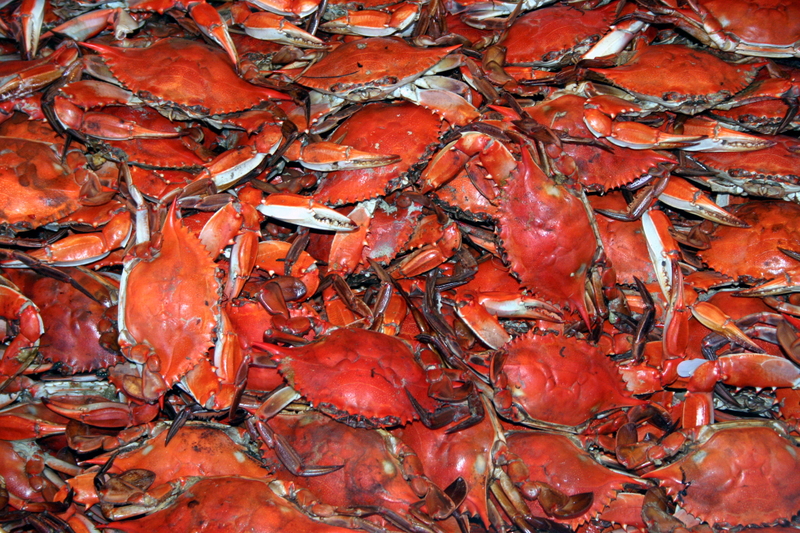 Cooked_crab