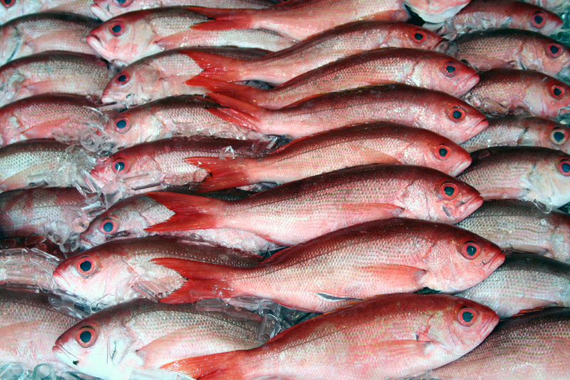 Red_fish