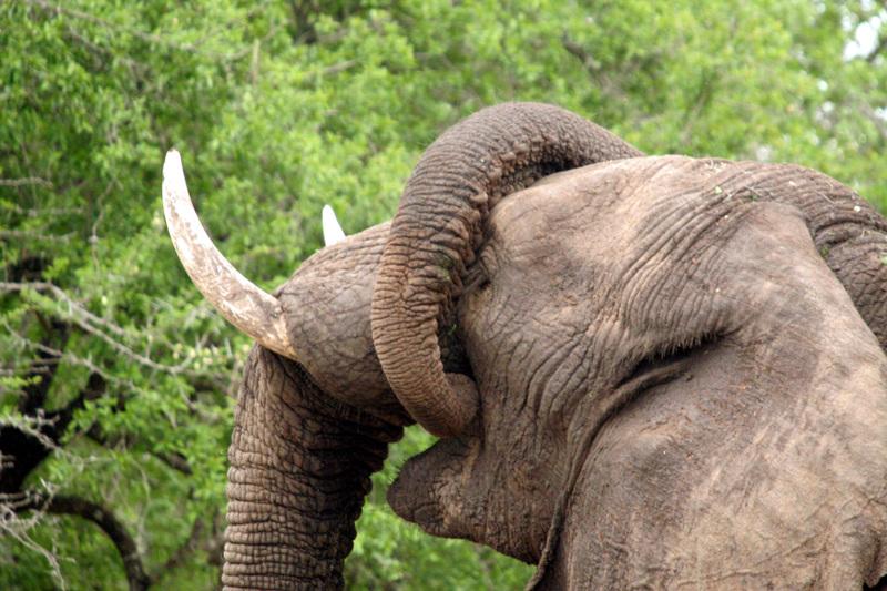Elephants_playing